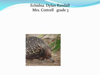 Echidna   Dylan  R andall     Mrs. Cottrell   grade 3