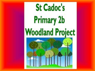 St Cadoc's Primary 2b  Woodland Project