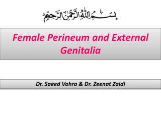 Female Perineum and External Genitalia