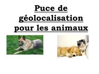 Puce de géolocalisation pour les animaux
