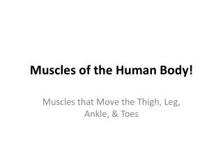 Muscles of the Human Body!
