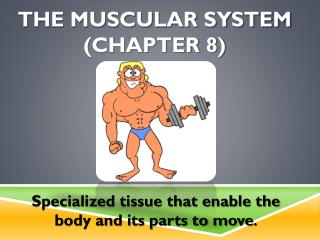 The Muscular System (chapter 8)