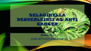 Selaginella deoderleinii  as anti  cancer