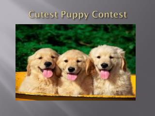 Cutest Puppy Contest