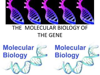 THE  MOLECULAR BIOLOGY OF THE GENE