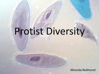 Protist  Diversity