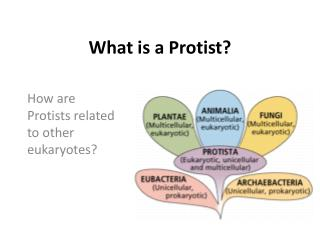 What is a  Protist ?
