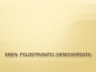 Kmen:  Polostrunatci  ( Hemichordata )