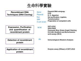 Recombinant DNA Techniques (DNA Cloning)