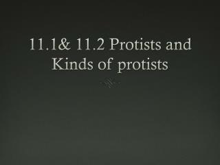 11.1& 11.2  Protists  and Kinds of protists
