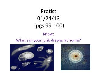 Protist 01/24/13  (pgs 99-100)