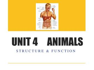 UNIT 4     ANIMALS