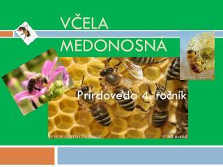 Včela medonosná
