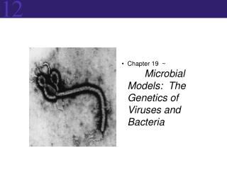 Chapter  19   ~	 Microbial Models:  The Genetics of Viruses and Bacteria