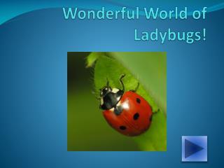 Wonderful World of Ladybugs!