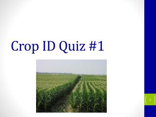 Crop ID Quiz #1