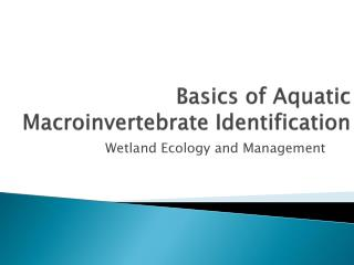 Basics of Aquatic  Macroinvertebrate  Identification