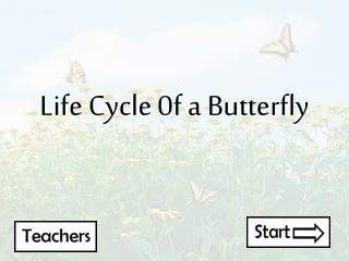 Life Cycle 0f a Butterfly