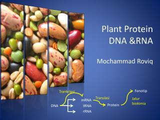 Plant Protein DNA &RNA