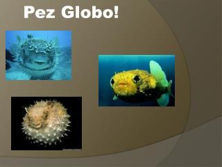 Pez Globo!