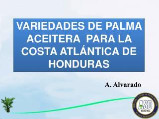 VARIEDADES DE PALMA ACEITERA  PARA LA COSTA ATLÁNTICA DE HONDURAS