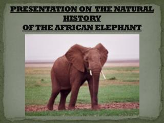 PRESENTATION ON  THE NATURAL HISTORY  OF THE AFRICAN ELEPHANT