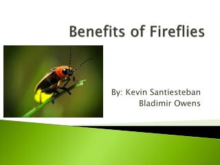 Benefits of Fireflies