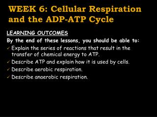 WEEK 6: Cellular Respiration and the ADP-ATP Cycle
