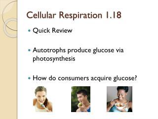 Cellular Respiration 1.18