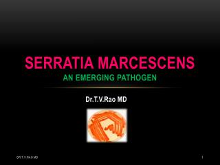 Serratia  marcescens an emerging pathogen