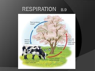 Respiration    B.9