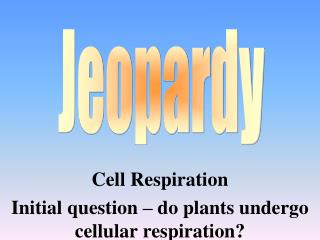 Cell  Respiration Initial question – do plants undergo cellular respiration?
