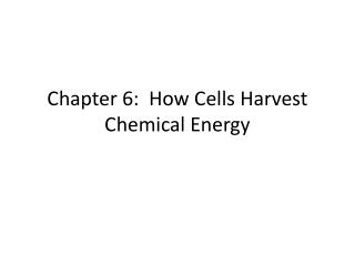 Chapter 6:  How Cells Harvest Chemical Energy