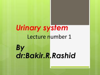 Urinary system By  dr:Bakir.R.Rashid