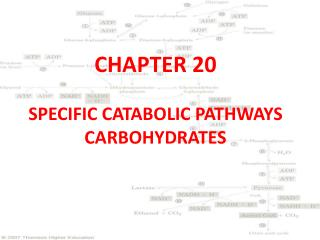 CHAPTER 20 SPECIFIC CATABOLIC PATHWAYS CARBOHYDRATES