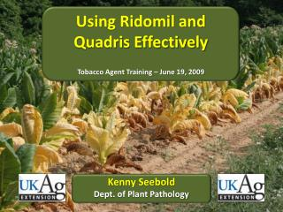 Using Ridomil and Quadris Effectively Tobacco Agent Training – June  19,  2009