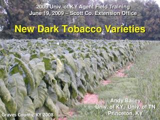 New Dark Tobacco Varieties