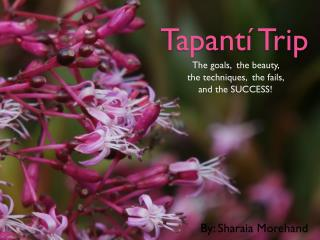 Tapantí Trip