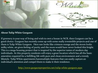 Tulip White Gurgaon