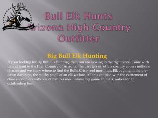 Bull Elk  Hunts Arizona  High Country Outfitter