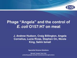 "Phage ""Angela"" and the control of  E. coli  O157:H7 on meat"