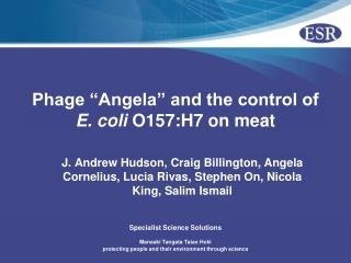 Phage �Angela� and the control of  E. coli  O157:H7 on meat