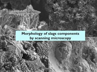 Morphology of  slags  components by scanning microscopy