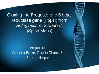 Project 17 Amanda  Brase , Charlie Chase, & Sheree  Harper