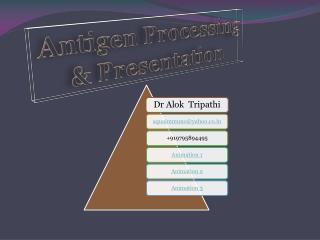 Antigen Processing & Presentation