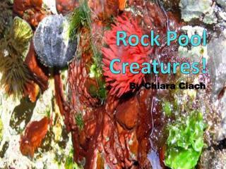 Rock Pool Creatures!