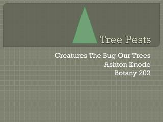 Tree Pests
