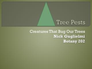 Tree Pests