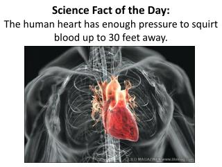 Science Fact of the Day: The human heart has enough pressure to squirt blood up to 30 feet away.