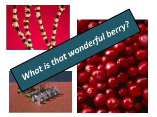 What is that wonderful berry?